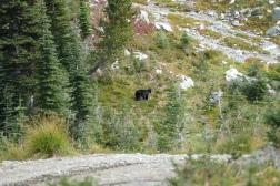 Der Bär am Wegesrand