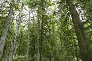 Kanadischer Regenwald