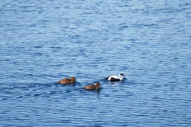 Die 3 haben unter Garantie mehr Wale gesehen als ich