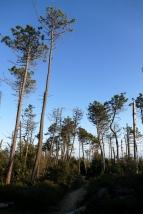 Gemütliche Wege durch die Nadelwälder