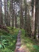 Selten habe ich mich über einen flachen Waldweg so gefreut.