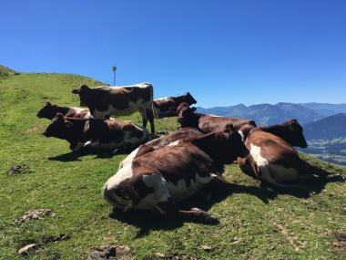 Selbst den meisten Kühen war es zu heiß zum Stehen.