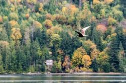 Jaja, nur ne Möwe - aber ein super Bild vom Cameron Lake