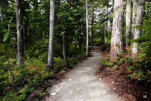 """""""Easy Trail"""" zum Aussichtspunkt."""
