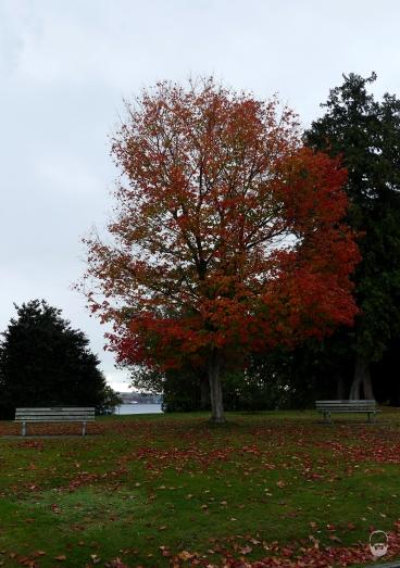 ...der Stanley Park; auch wenn das Wetter heute nix kann.