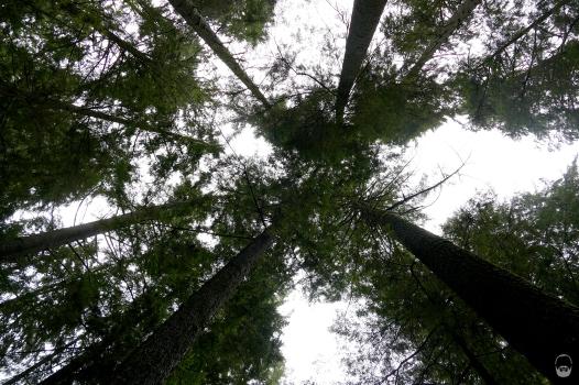 """Aber auch der Blick nach oben, in das """"Dach"""" des Regenwaldes ist ein Traum."""
