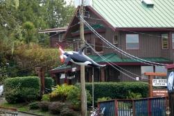 ...und Walen in allen Formen.
