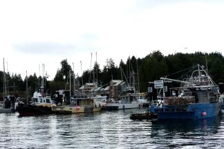 Wir tuckern durch den Fischerhafen...