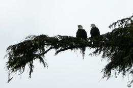 Das ist das Bild: Herr und Frau Bald Eagle.