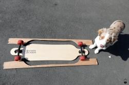 Unglaublich, dass aus mehreren Schichten Holz, wirklich mein selbstgebautes Brett wurde. Star in diesem Bild ist aber Buddy der Schreinerei-Hund.