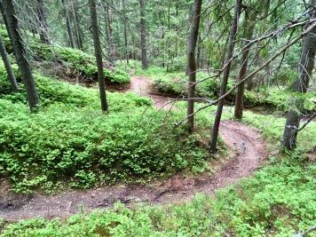 Wie auch auf den perfekten Trails.