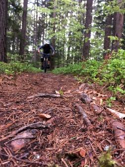 ...mal sanfter Waldboden, aber immer genial.