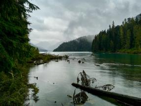 Das Ufer des Cheakamus Lake (samt Regen).