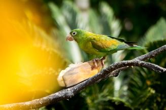 ...und Papagei samt Freunden rechts.