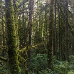 Ein kleiner Hauch von Great Canadian Rainforest.