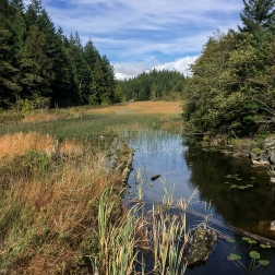 Und schließlich der Brohm Lake selbst (von der Brücke aus).