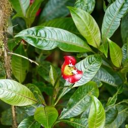 Hier ist die Pflanzenvielfalt unfassbar.